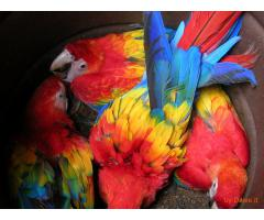 Healthy Macaw Parrots and Fertile Eggs