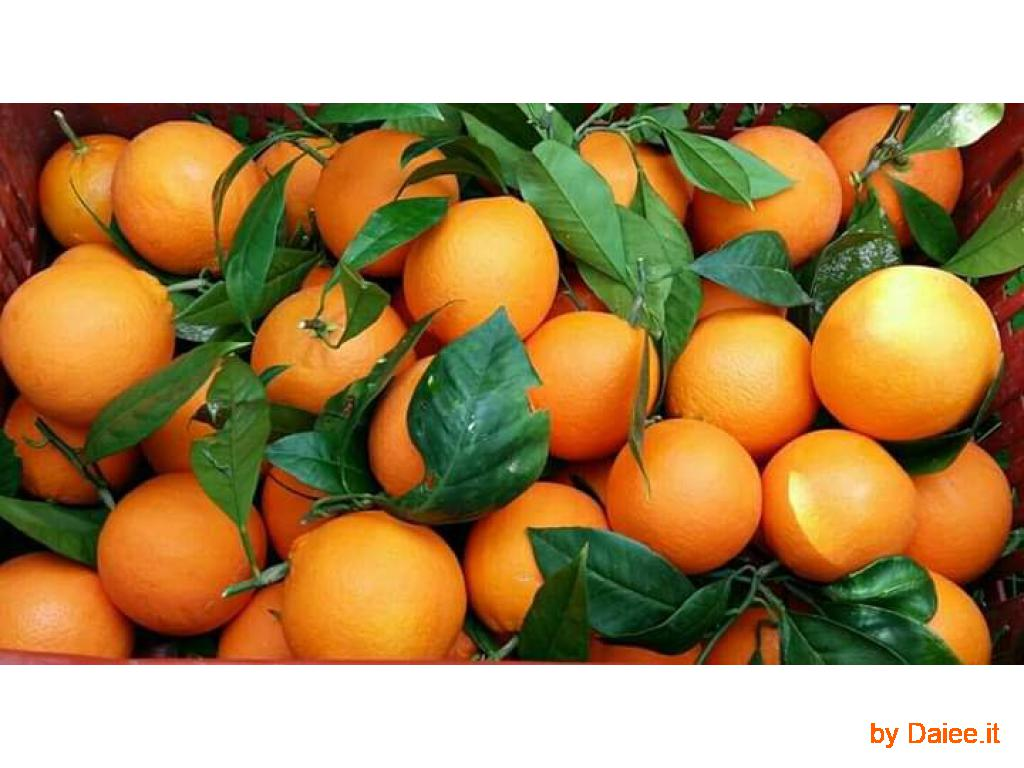 Arance tarocco di Sicilia da spremuta
